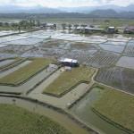 Lahan minapadi yang marginal untuk udang windu di Desa Lawallu, Kecamatan Soppeng Riaja, Kabupaten Barru, Prov.Sulawesi Selatan (Foto:maritim/humas brsdm)